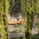UKMDS-Zoo-Rallye-2016-08